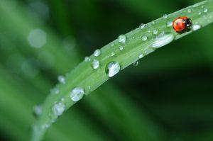 ladybug-574971_1280