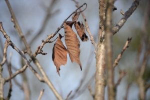 leaves-1263287_1280
